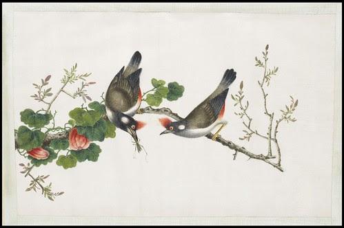 Bird Album j