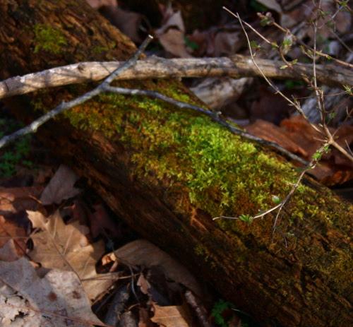 velvet.wood