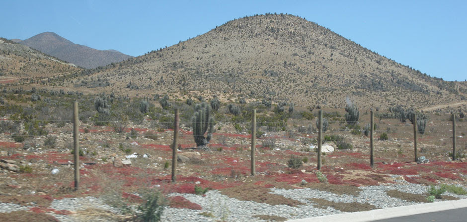 red lichen at the desert
