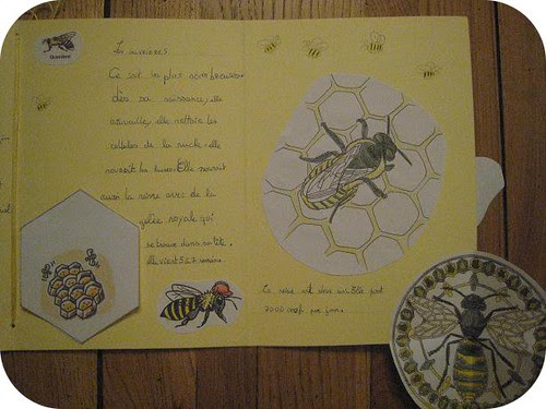 lapbook abeille 10