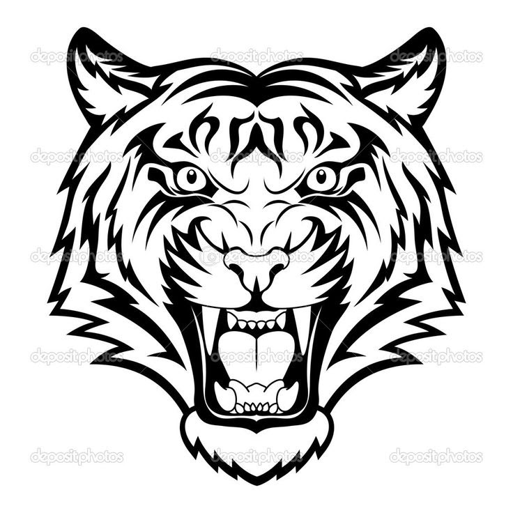 Tiger Tattoo Drawing At Getdrawingscom Free For Personal Use