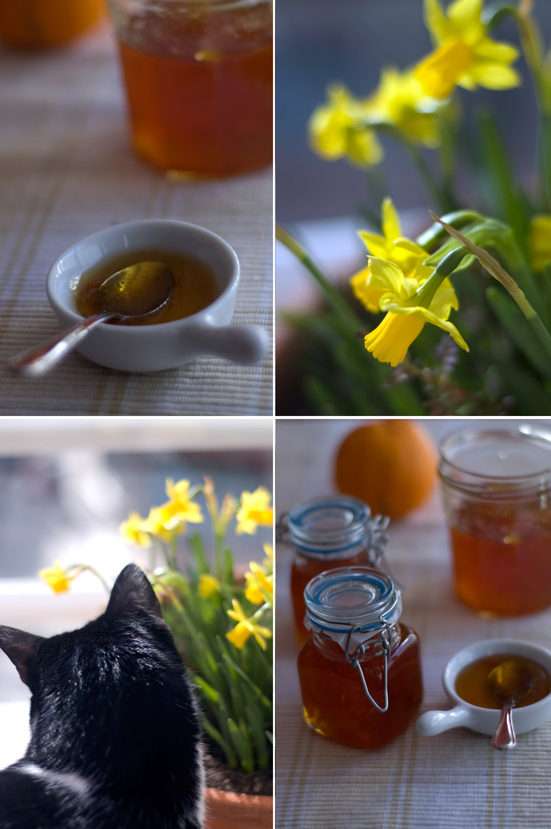 Doce de laranja // Marmalade