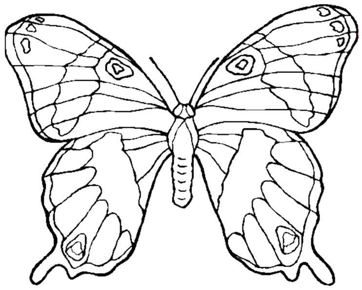Ausmalbilder Schmetterling Kostenlos Ausdrucken