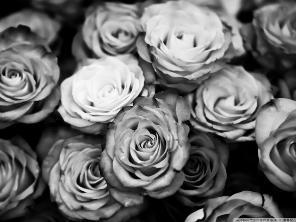 Hoontoidly Roses Tumblr Black And White Images