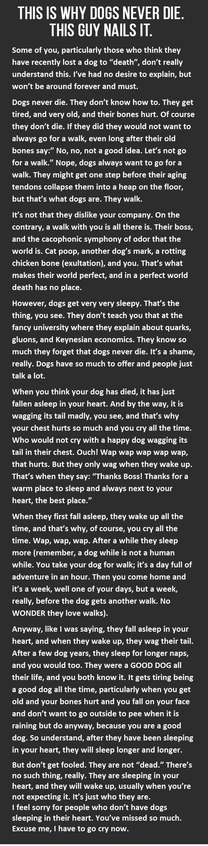This Is Why Dogs Never Die