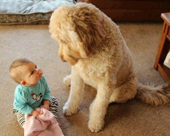 bebes y perros14
