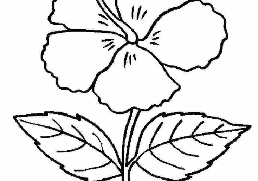 100 Contoh Sketsa Bunga Yang Mudah Di Gambar Gudangsket