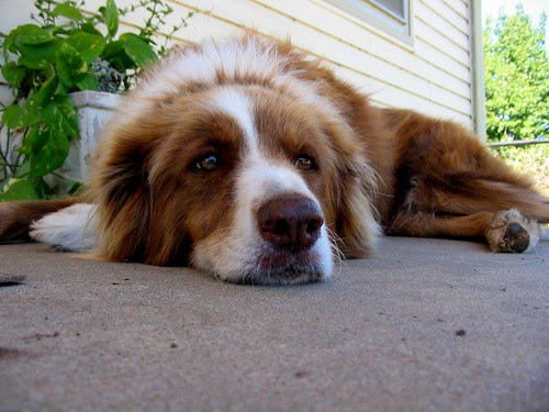 My dog being bored by joshme17, on Flickr