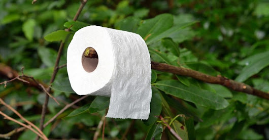Best RV Toilet Paper | Biodegradable Toilet Paper for RV Toilets | The Toilet Zone