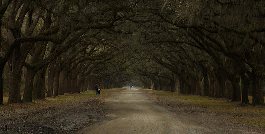 Walking In Wormsloe  by Stacy Sikes