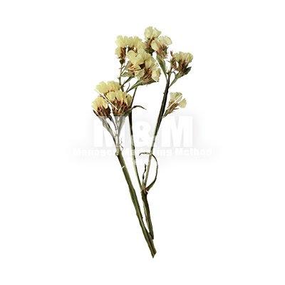 切り抜き素材花 ドライフラワー スターチス Mm Collection