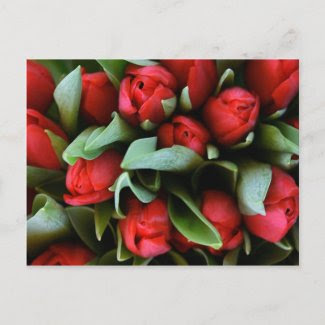 Red Tulips Bouquet postcard