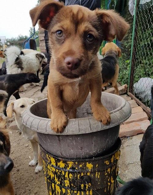 Dirige un refugio que alberga a 750 perros porque acepta y cuida a cachorros que nadie quiere
