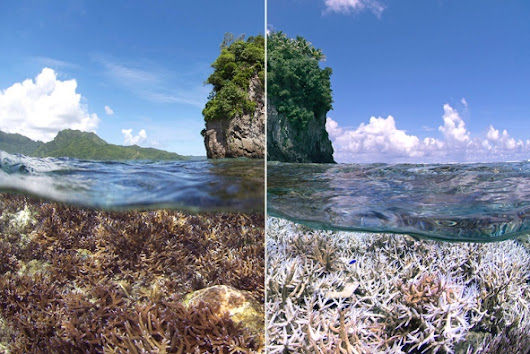 Corals worldwide hit by bleaching