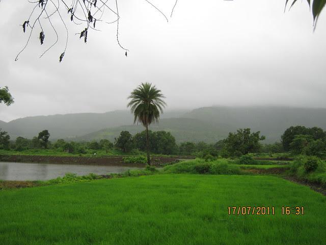 Paddy Fields on Pirangut Ghat - Urawade Naka Road - Visit to Mont Vert Vesta Urawade Pirangut Pune 412 108