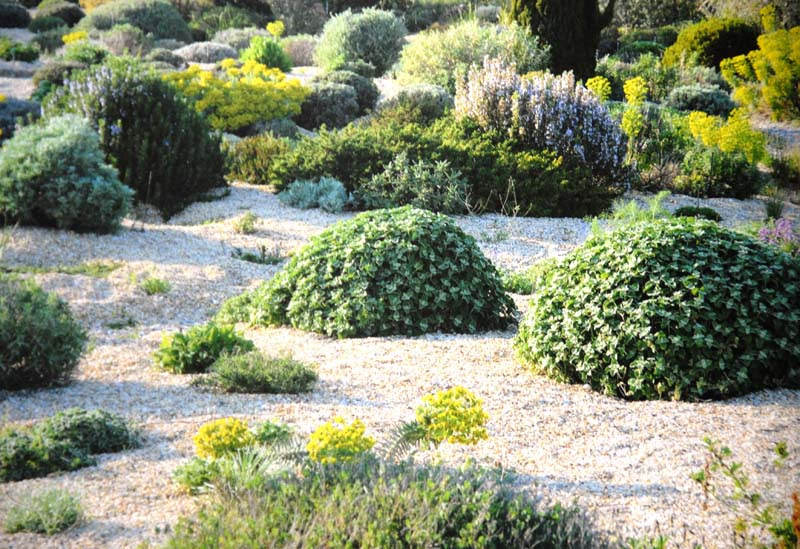 Planting Design For Dry Gardens 4 Irish Garden Plant Society