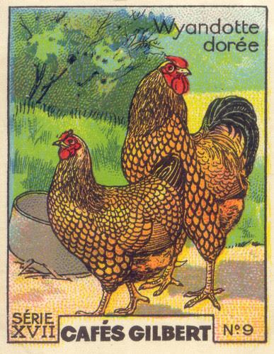 gilbert poules 9