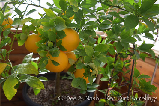 Growing plants in the greenhouse - Red Dirt Ramblings®