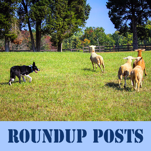 A Round-Up Post About Roundup Posts | Sue Bride