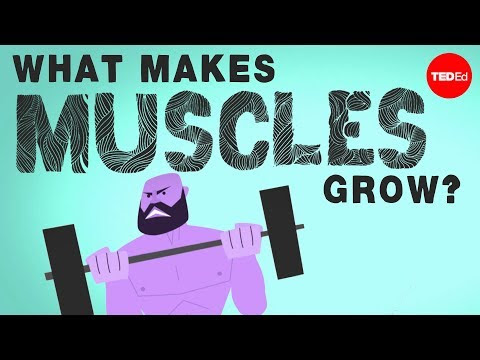 What makes muscles grow? - Jeffrey Siegel