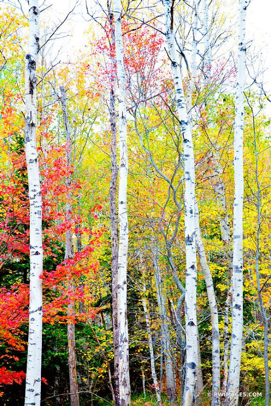 Photo Print of FALL FOLIAGE ACADIA NATIONAL PARK MAINE COLOR VERTICAL Print Framed Picture Fine Art Photography Large Print Wall Decor Art For Sale Stock Image Photo Photograph High Resolution Digital Download Aluminum Metal Acrylic Canvas Framed Photo Print Buy Photo by Robert Wojtowicz Fine Art Photographer