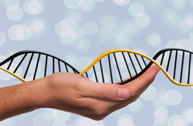 <p>La técnica CRISPR-Cas9 de edición genética ha despertado muchas expectativas por su posible aplicación en humanos enfermos y sanos. / CC</p>
