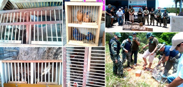 Pássaros foram apreendidos e gaiolas destruídas pelos guardas municipais em Natal (Foto: Divulgação/Guarda Municipal de Natal)