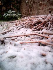 neige dans le jardin, 281205