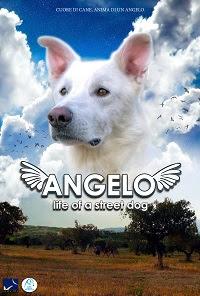 Risultati immagini per ANGELO – LIFE OF A STREET DOG