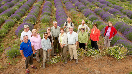 Country Walkers Introduces Lavender in Provence Tour
