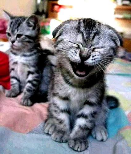 Unduh 93+  Gambar Kucing Ketawa Paling Imut