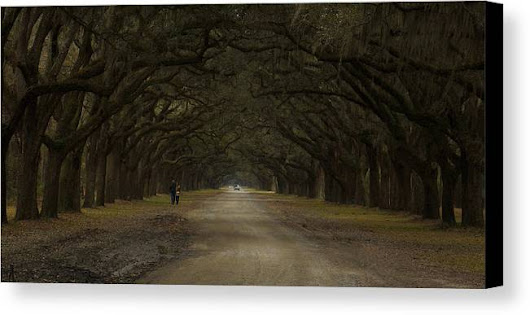 Walking In Wormsloe Canvas Print