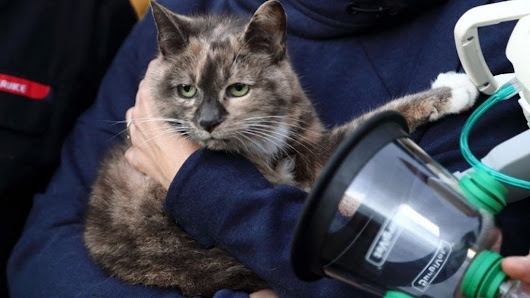 Shetland firefighters use oxygen masks for animals - BBC News