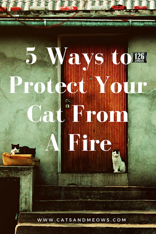 5 Ways To Protect Your Cat From Fire - Cats and Meows