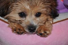 Puppy peek