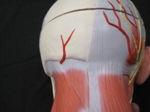 Suboccipital Tension Headaches Neck Pain Graston Chandler AZ