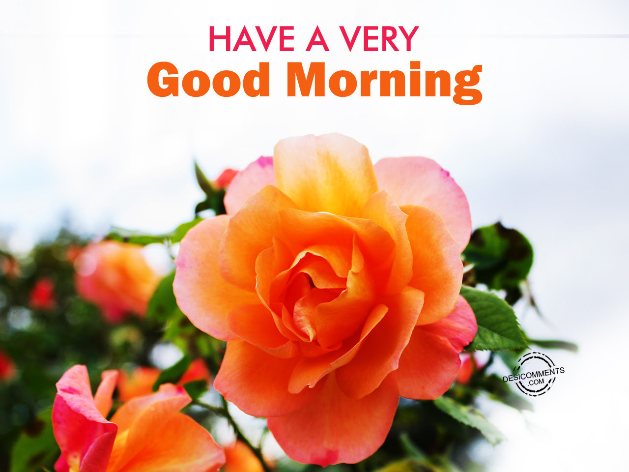 Very Sweet Good Morning Wallpaper A Very Cute Morning Ecard Free