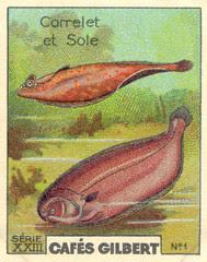 gilbert poissons 1