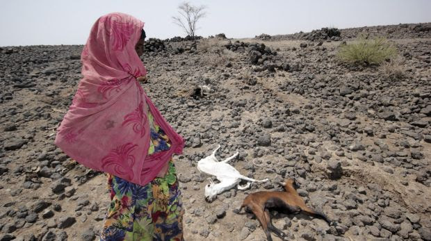 A girl walks past the carcasses of goats in drought-stricken Ethiopia, where 10 million people are thought to be at risk.