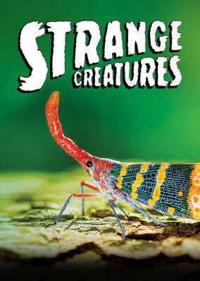 Strange Creatures - Season 1