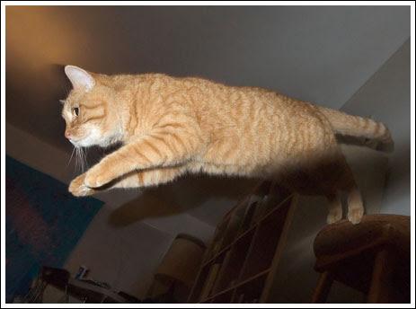 Los gatos pueden volar (20 fotos)