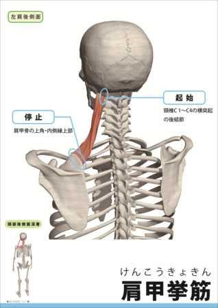 筋肉イラスト集筋肉総覧奥山正次 映像制作に関するブログ