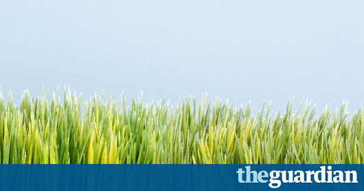 Pain in the grass: alternatives to high-maintenance lawns | Life and style | The Guardian