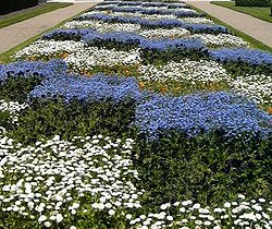 Checkered flower bed in Tours, France.