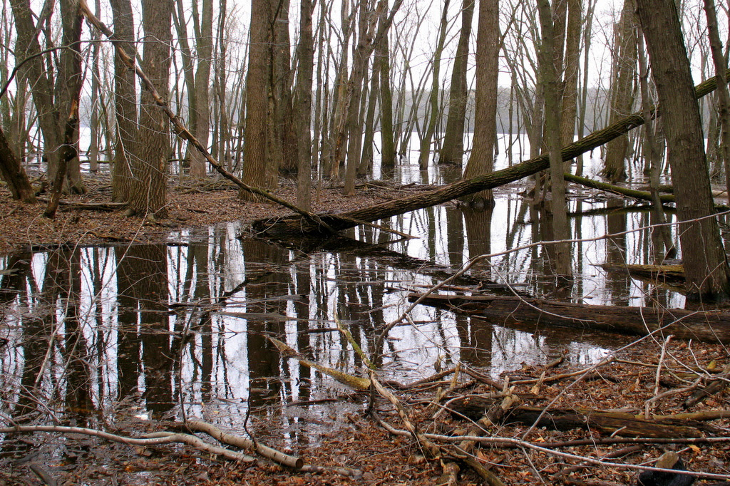flooded waters on the St Croix River
