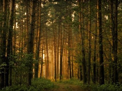 Hutan  Pohon Wallpaper  Pemandangan Alam alam Wallpaper