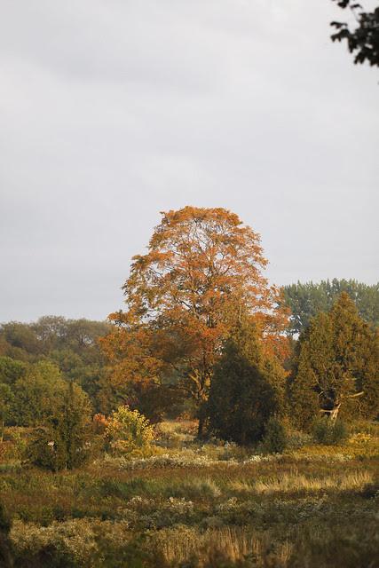 bv tree