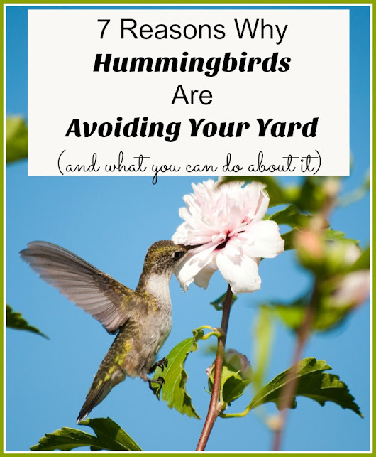7 Reasons Why Hummingbirds Are Avoiding Your Yard