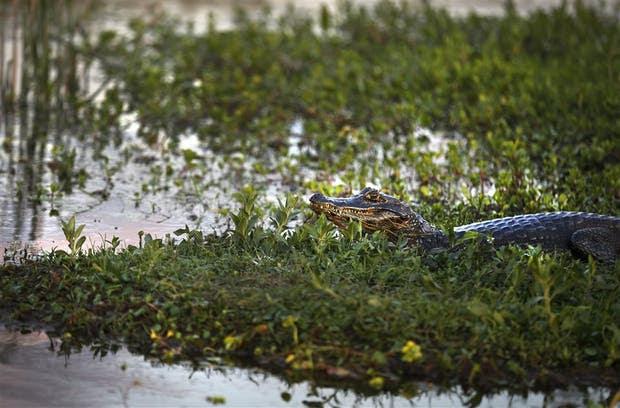 Los Esteros del Iberá, uno de los humedales más importantes del país