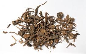 230-plantas-medicinales-mas-efectivas-y-sus-usos-valeriana-raiz